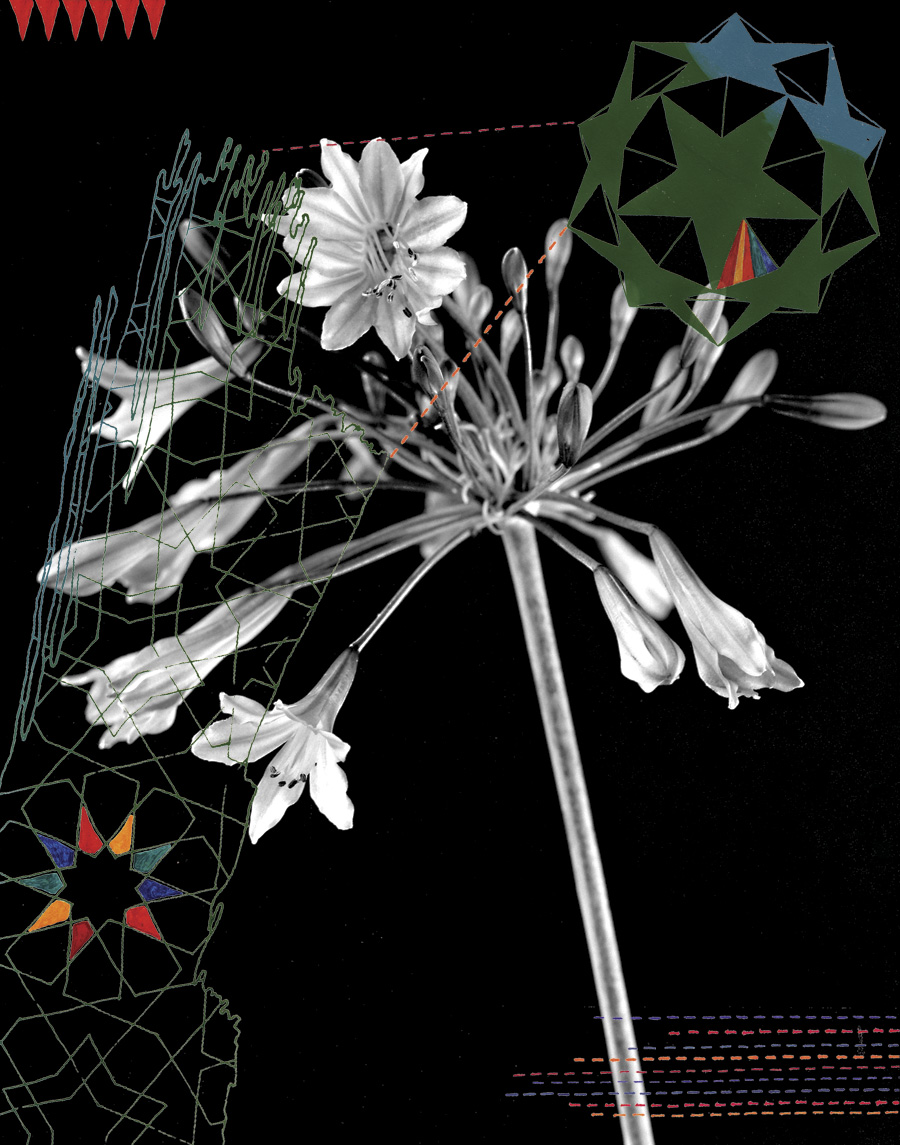 Agapanthus, 2007. Digital illustration over photograph. 24 × 20 cm