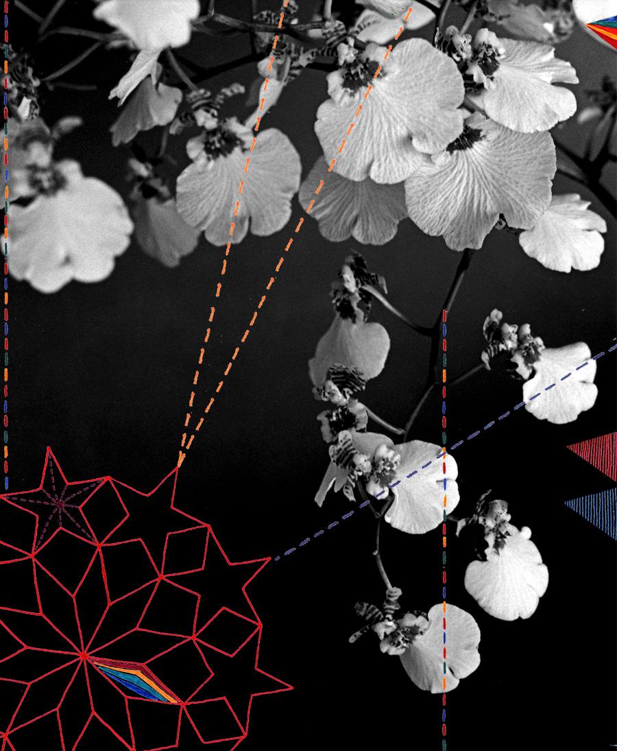 Orchid, 2007. Digital illustration over photograph. 24 × 20 cm