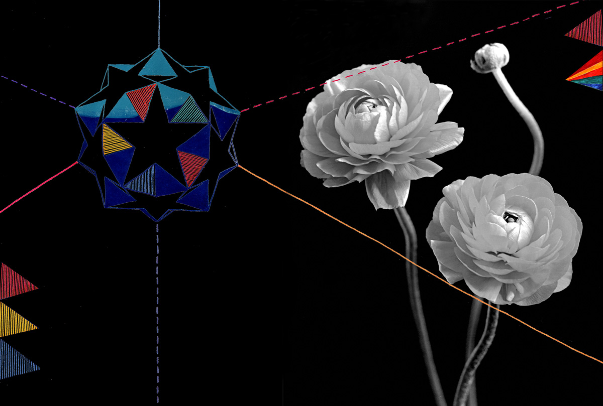 'Ranunculus', 2007. Digital illustration over photograph