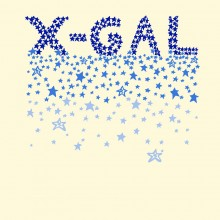 'X-Gal' Print. Zakee Shariff for X-Girl, SS08